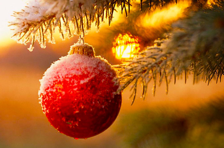 Pranzo di Natale a la carte a Rimini